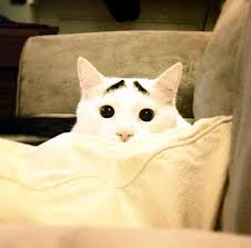 cateyebrow